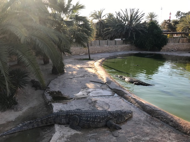 explore-djerba-crocodiles